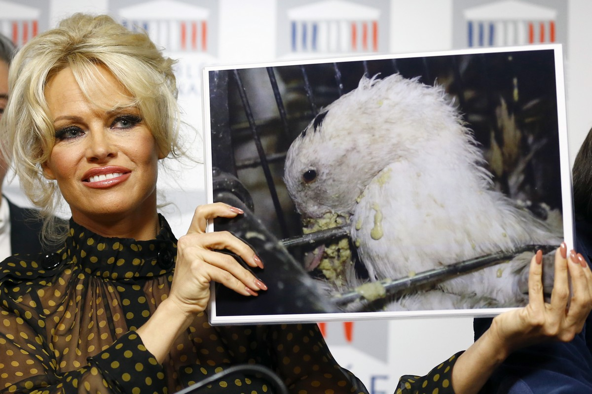 Pamela Anderson, actress and animals rights defender, displays photos during a news conference at the French National Assembly to protest the force-feeding of geese used in the production of foie gras, in Paris, France, Tuesday, Jan. 19, 2016. (AP Photo/Francois Mori)